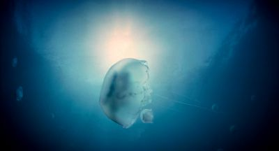 Still from The Tree of Life (2011) that has been tagged with: underwater